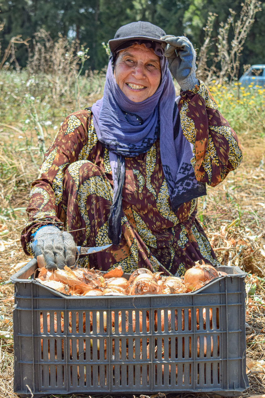 A woman in a blue scarf squatting and harvesting onions